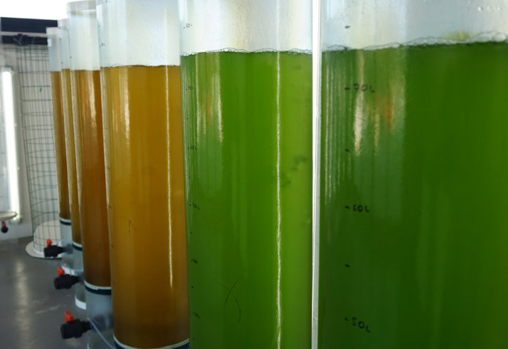 microalgae-credit-algared