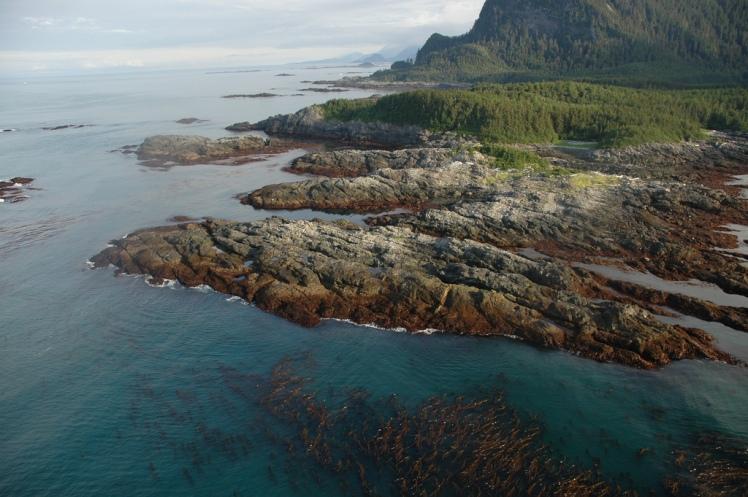 kelp aerial