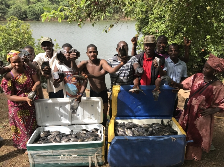 Guinea-Bissau tilapia aquaculture